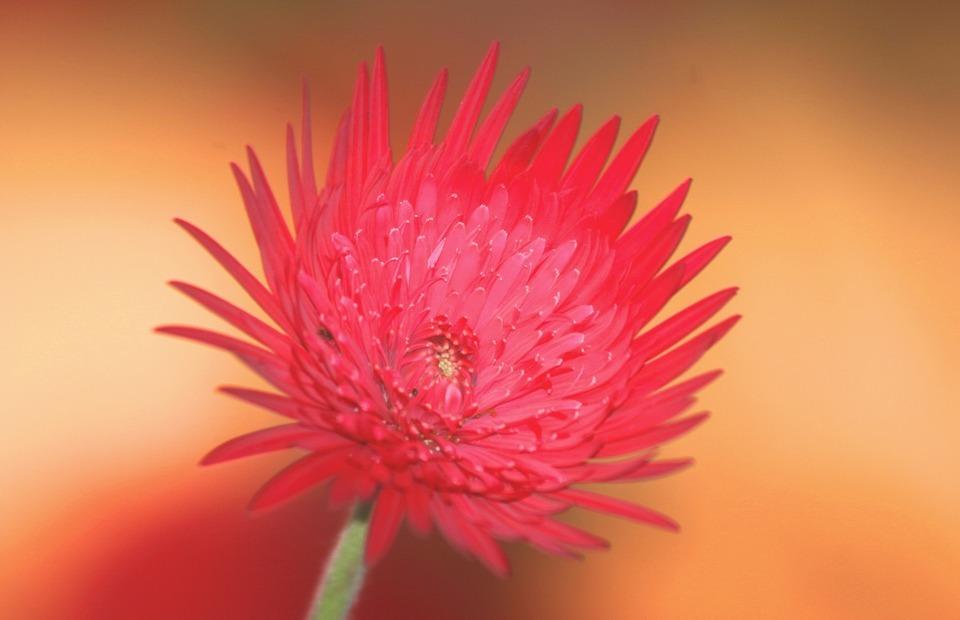 flower, exotic, botanical