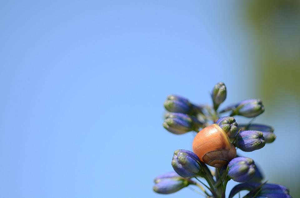 hydrangea, bud, flower