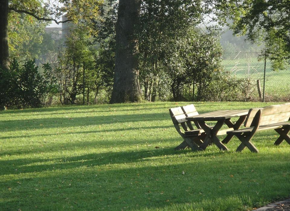 park, bank, picnic
