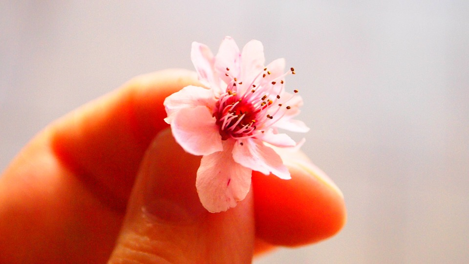 pink, flower, small