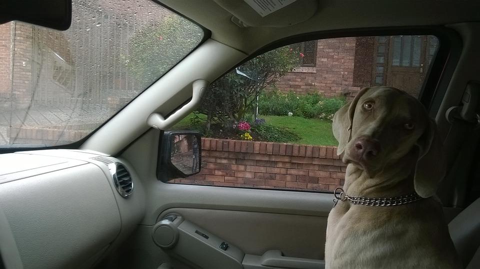 dog, truck, love