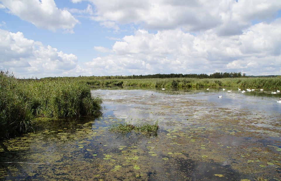 landscape, spring lake, nature reserve