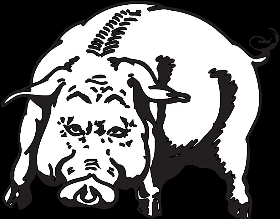 angry, pig, animal