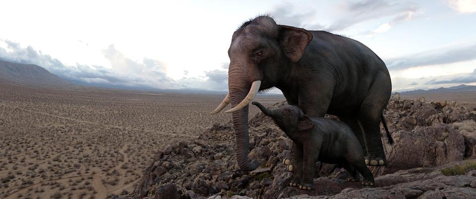 computer art, elephants, baby elephant