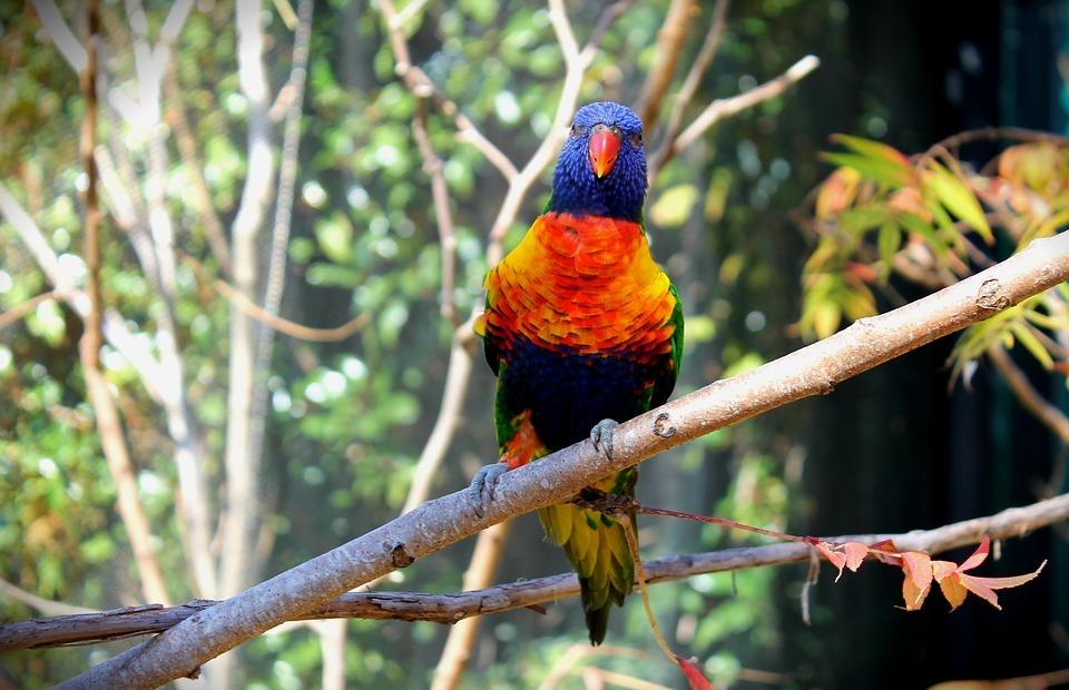 bird, colorful birds, colorful