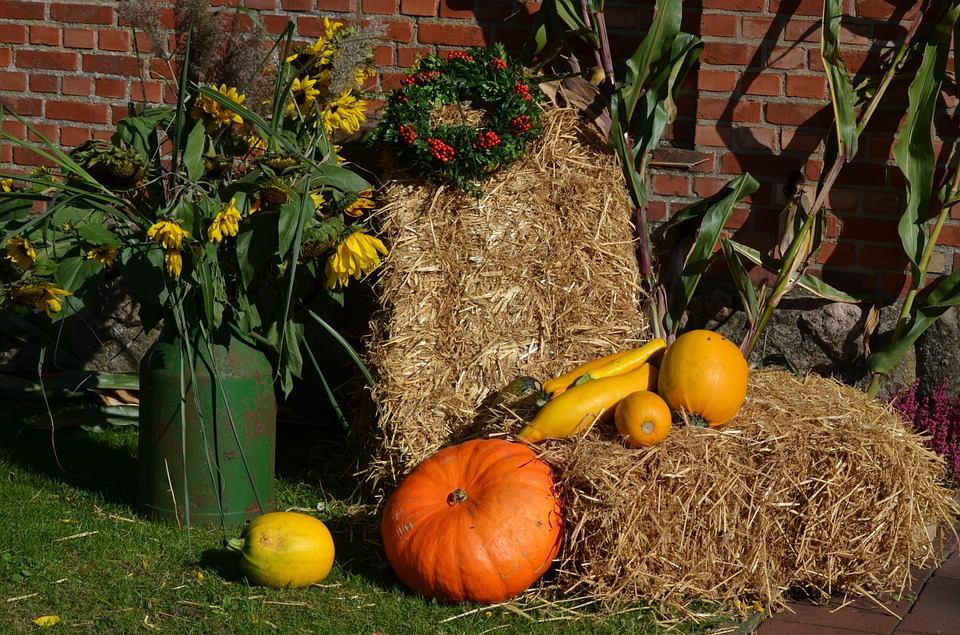 thanksgiving, pumpkin, autumn decoration
