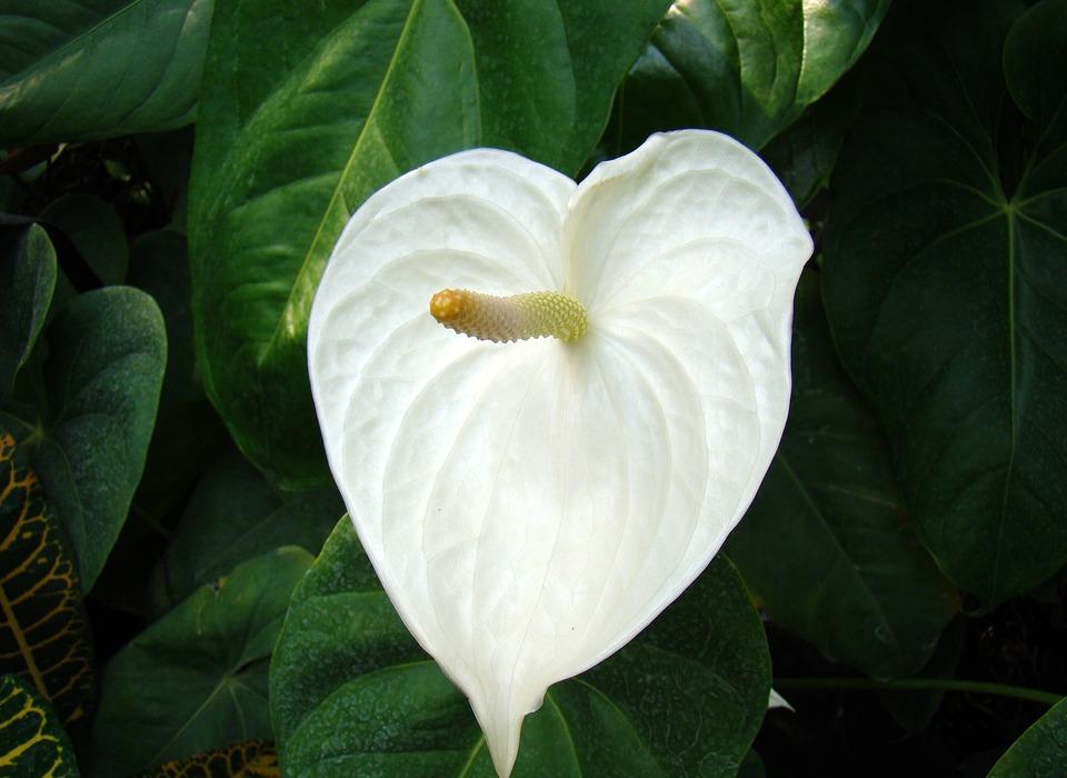 flower, white flower, exotic flower