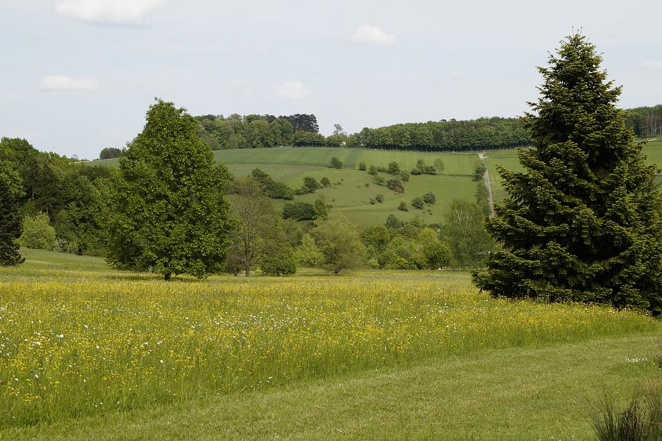 landscape, spring, sweet