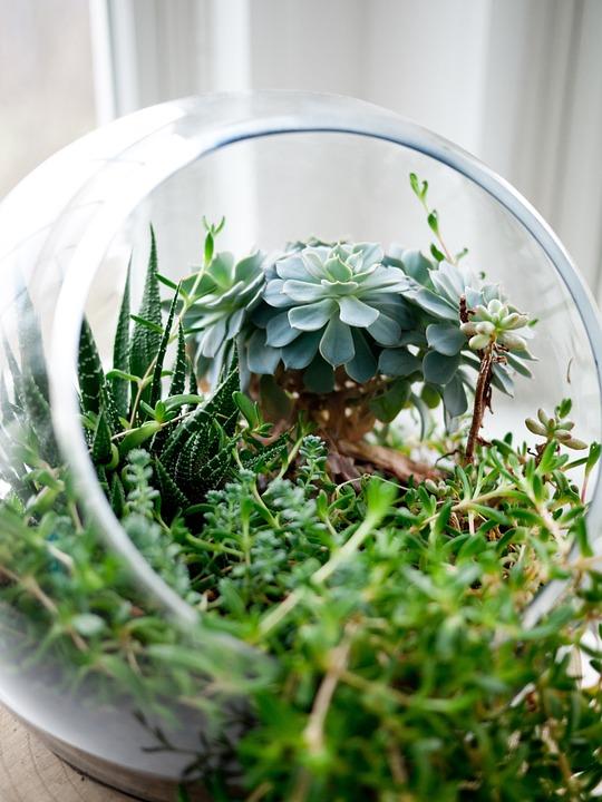 succulents, plants, glass bowl