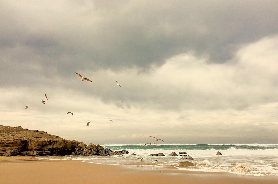 seaside, seashore, seagull