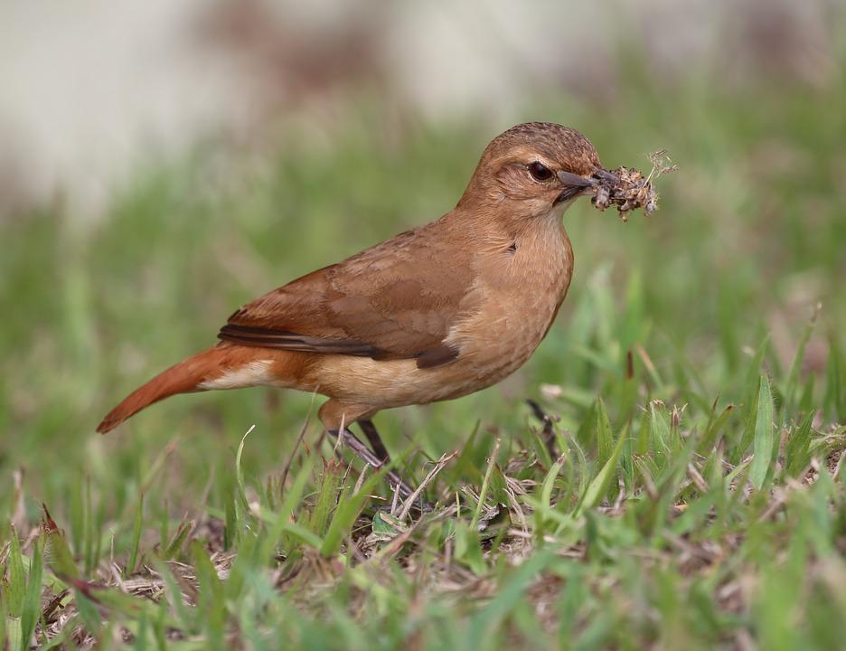 john clay, bird, tropical