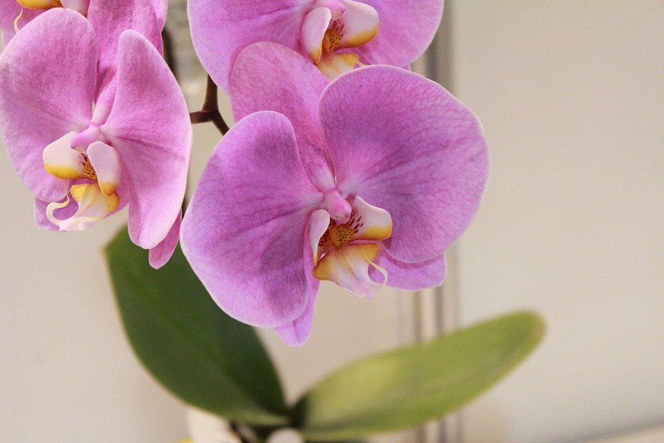 flower, orchid, flowers