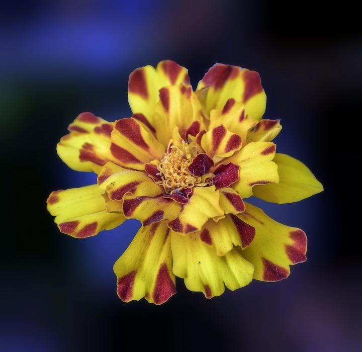 flower, exotic, plant