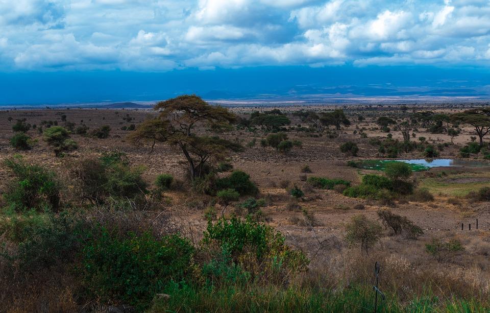 safari, africa, park