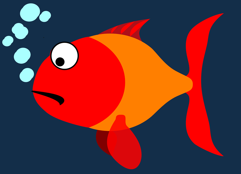 fish, cartoon, scared