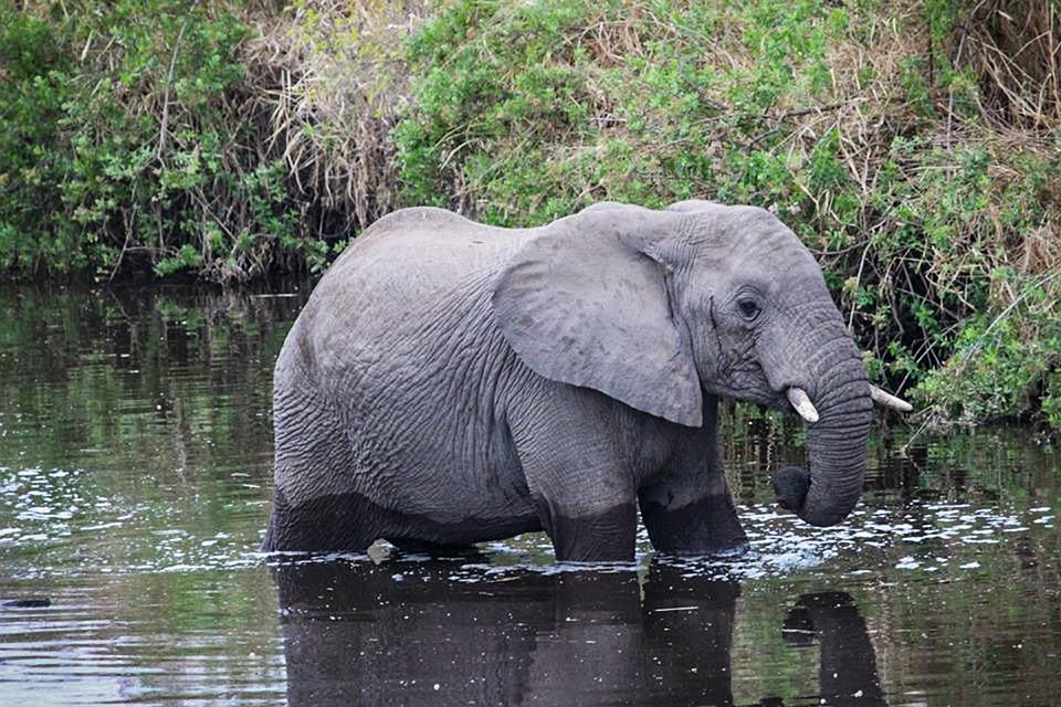 safari, tanzania, serengeti