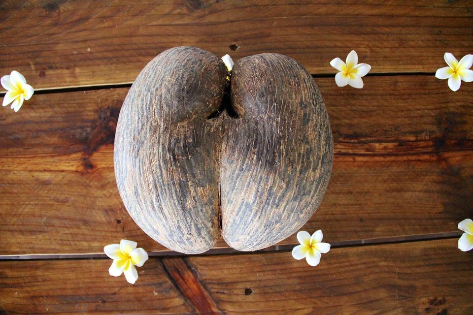 coconut, seychelles, coconut tree