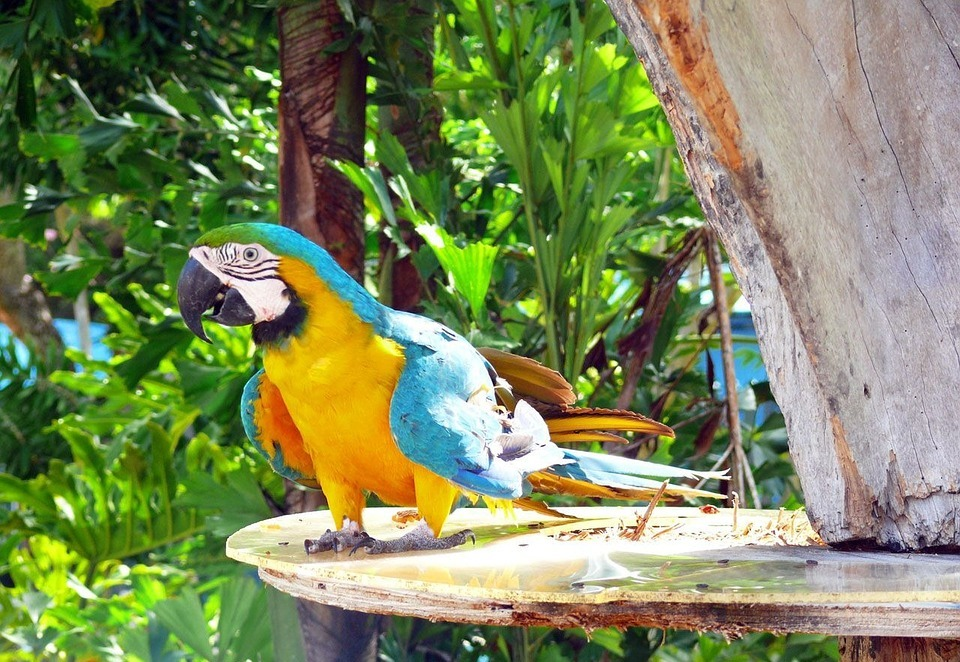 parrot, colorful, bird