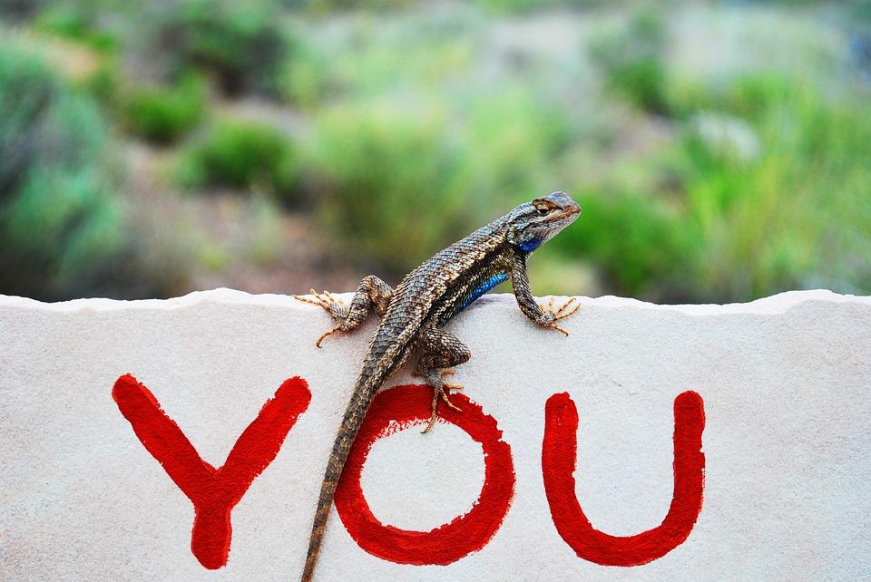 lizard, reptile, graffiti