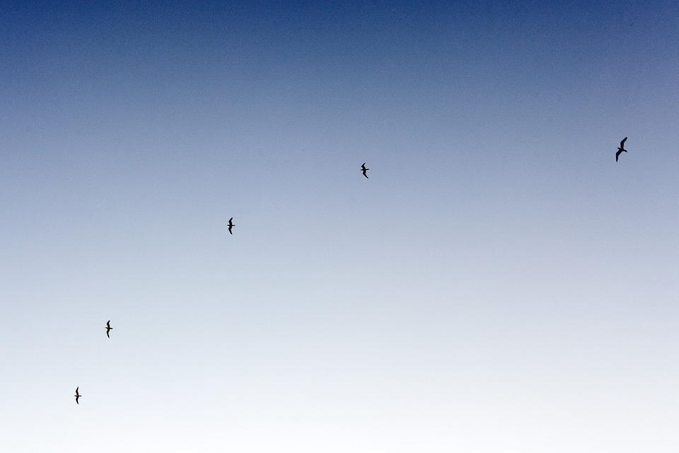 birds, flying, sky
