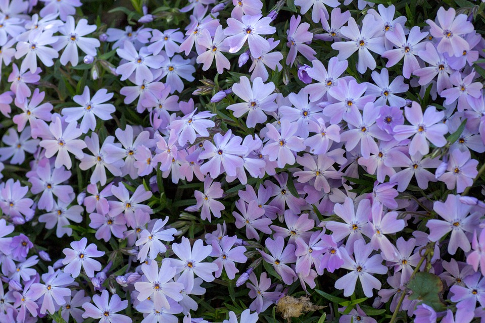 flowers, small, spring