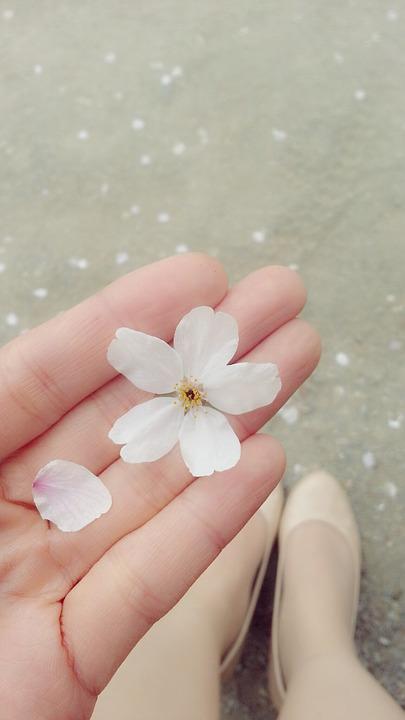 cherry blossom, petal, shoe