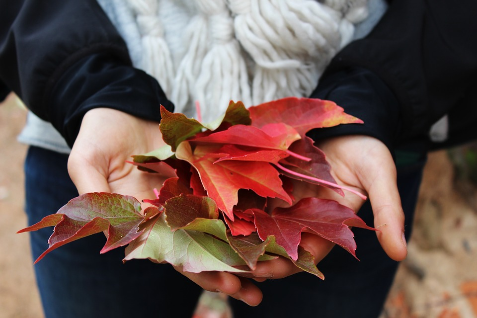 leaves, hands, holding
