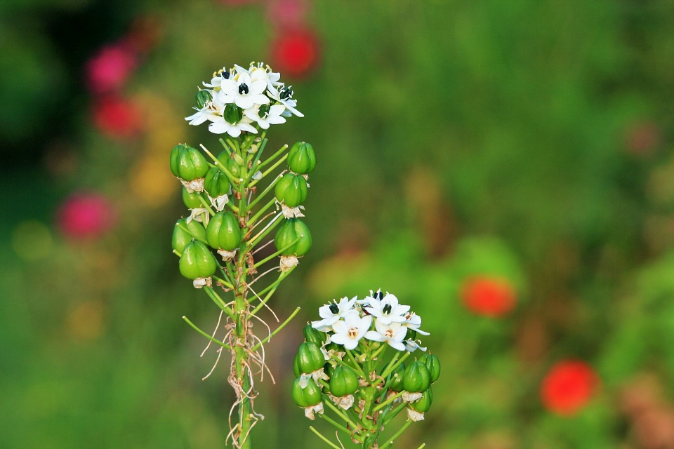 flowers, small, white