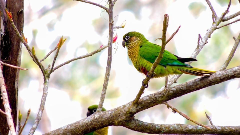 parrot, bird, tropical birds