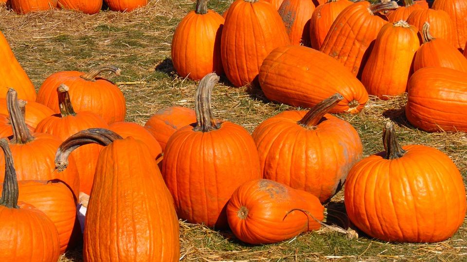 pumpkin, pumpkin patch, halloween
