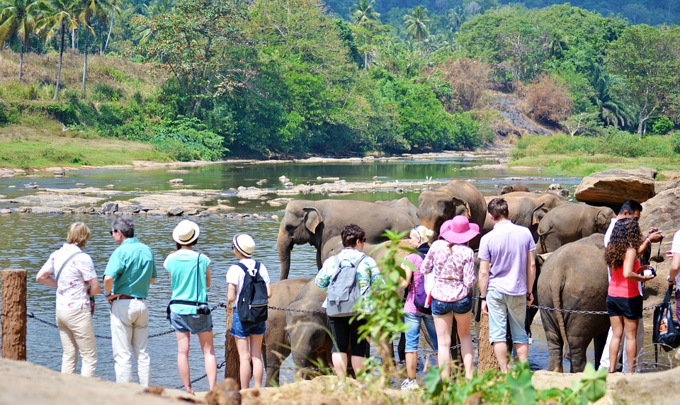 tourists, tourist attraction, elephants