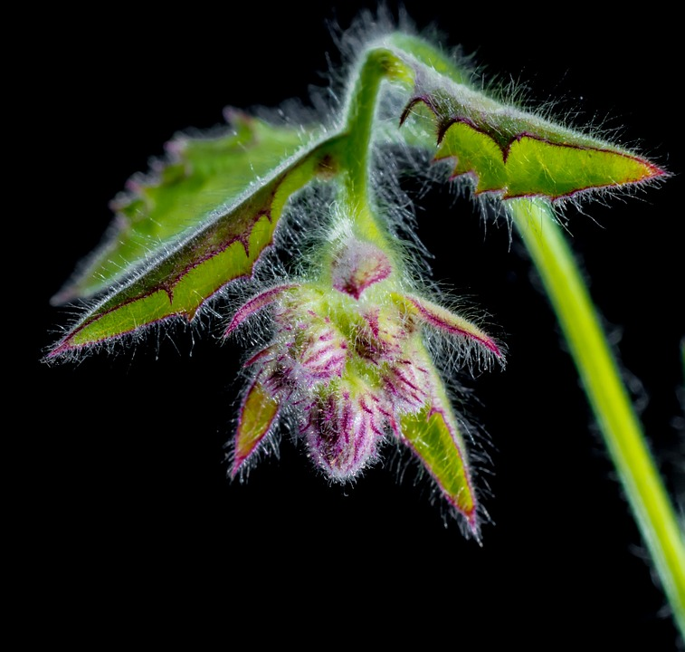 small flower, wild flower, blossom