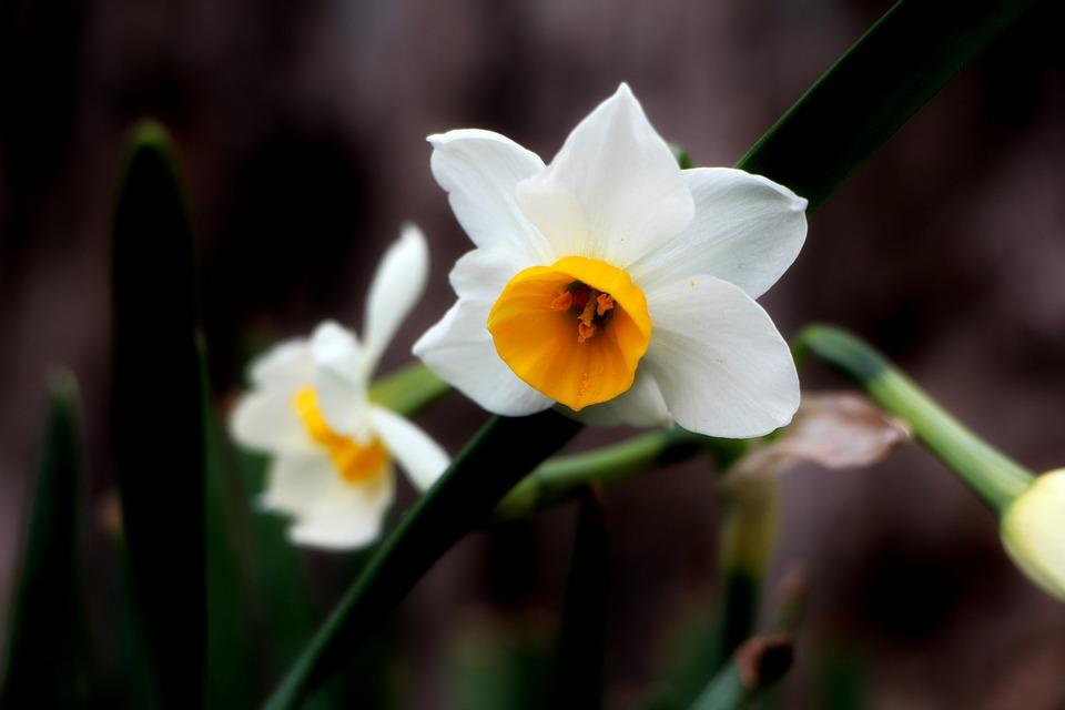 Die Richtige Wahl Der Geburtstagsblumen Bedeutung Der Blumen