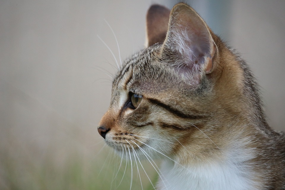 cat, kitten, cat baby