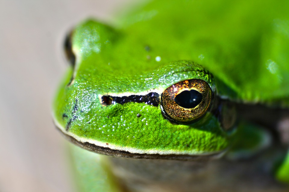 green, frog, animal