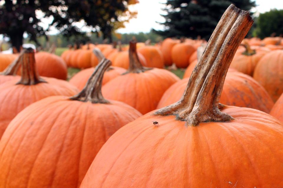 pumpkins, halloween, october
