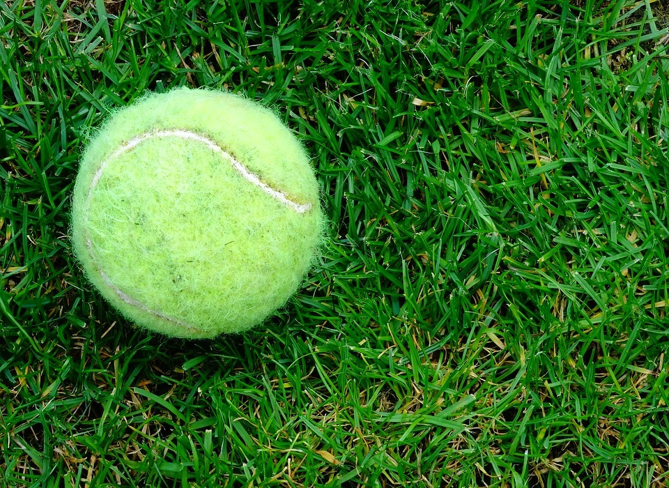 tennis-ball, grass, outdoor