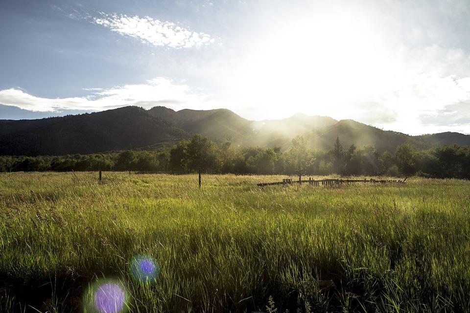 grassy field, green field, sunspot