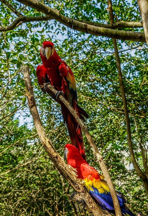 birds, tropical, colorful