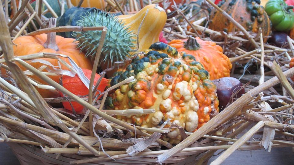 thanksgiving, pumpkins, autumn