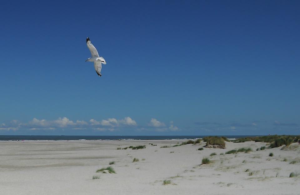 seagull, beach, sky