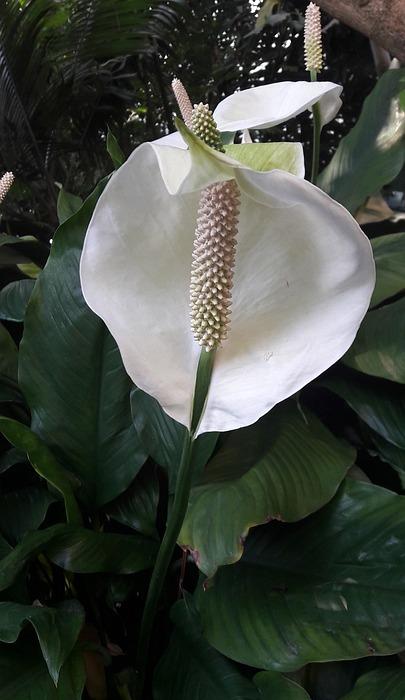 flower, flowers, exotic