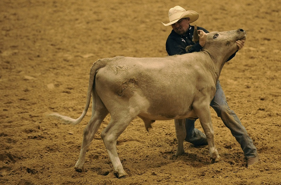 rodeo, steer, wrestling