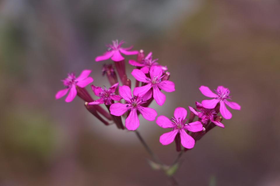 wild flower, plant, small flower