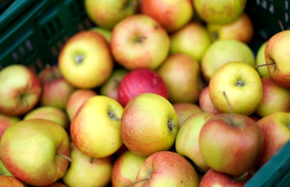 thanksgiving, apple, fruit