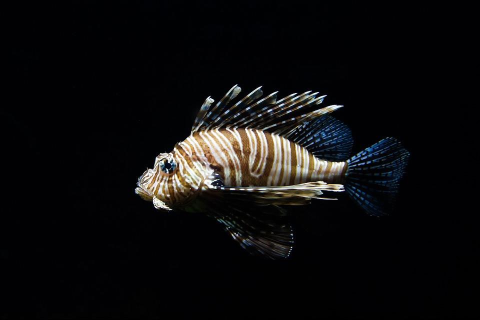 nature, animal, fish