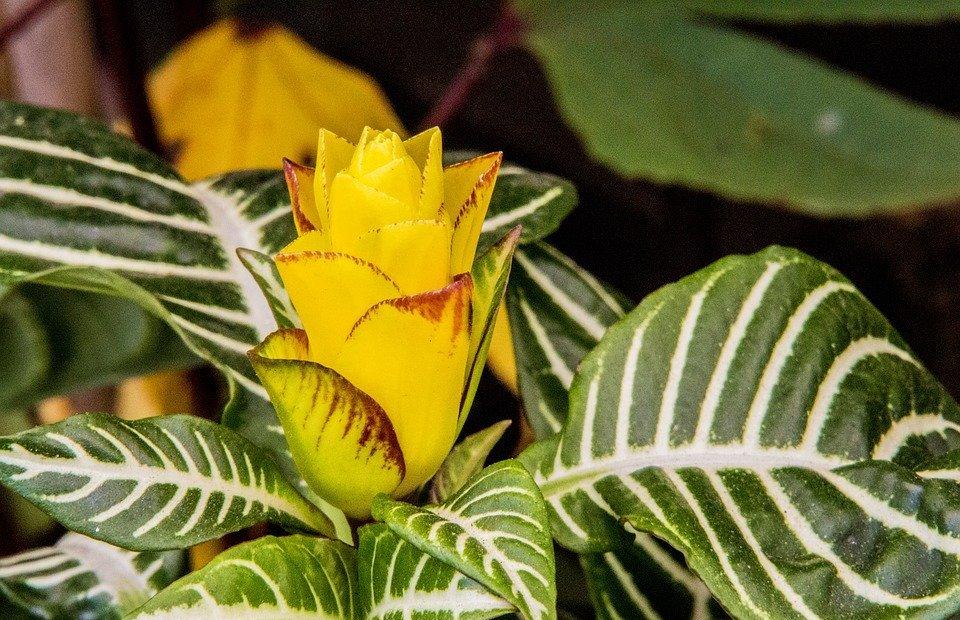 exotic flower, yellow flower, nature