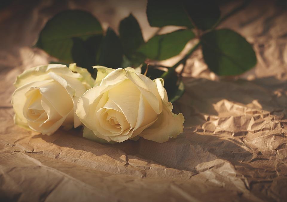 white roses, flowers, romance