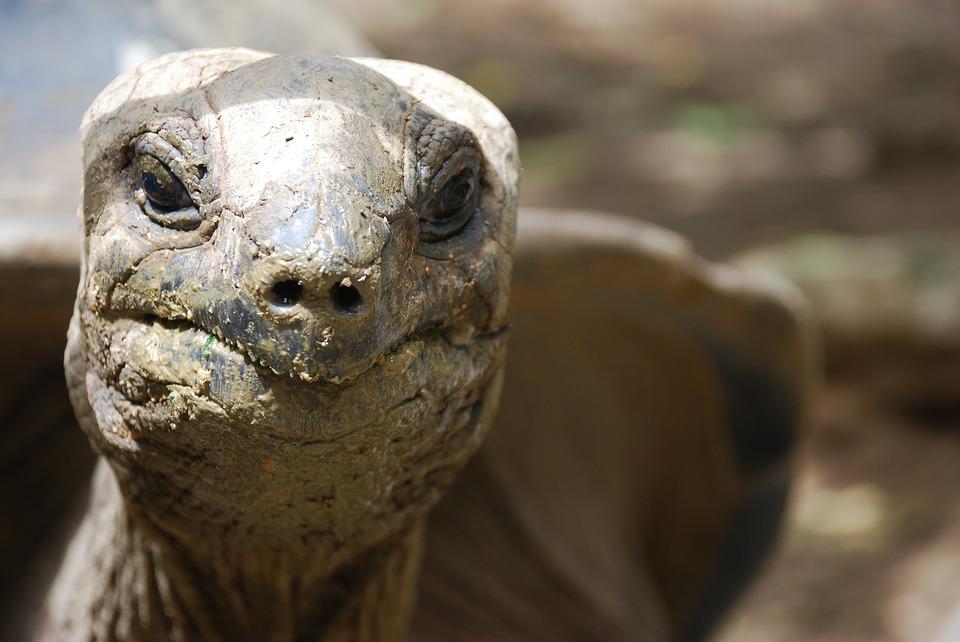 dirty, reptile, closeup