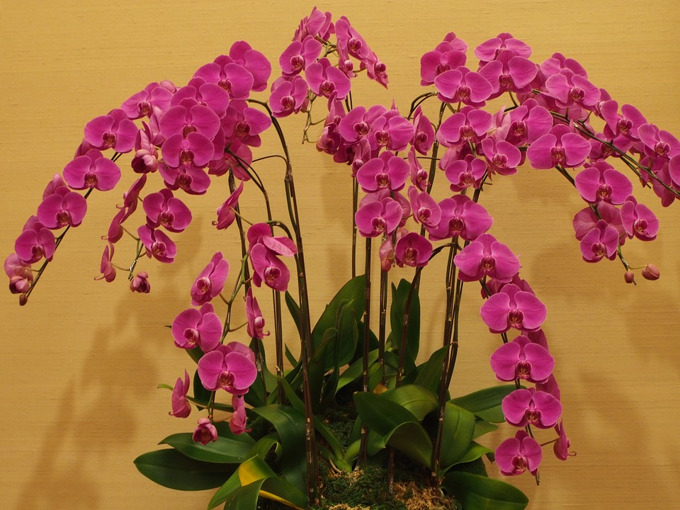 butterfly the falkland islands, orchid, big flower